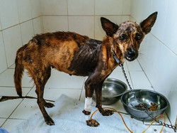Mandi after rescue_in the clinic