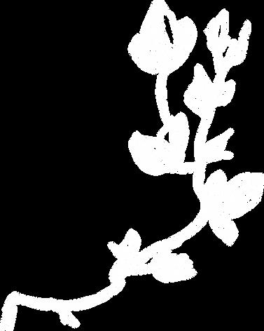 flora-9.png