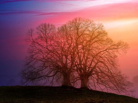 U susret najtežim životnim trenutcima kao drvo, prilagodljivo i ponosno...