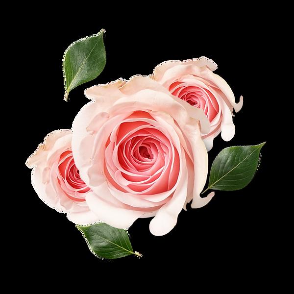 —Pngtree—beautiful_fresh_flower_petals_3