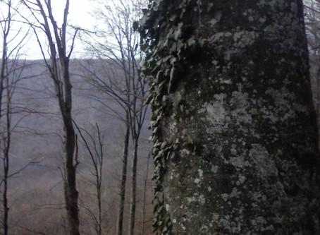 Šumski Duh