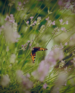 Butterflies_edited_edited.jpg