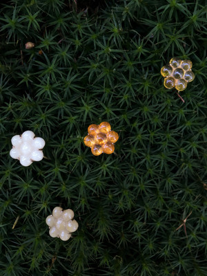 Le Petite Flowers