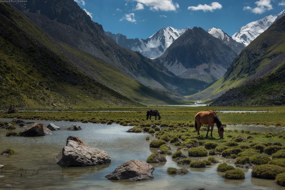 horses at water