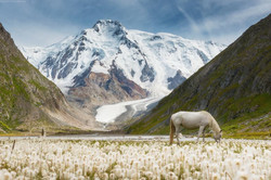 white horse white peak