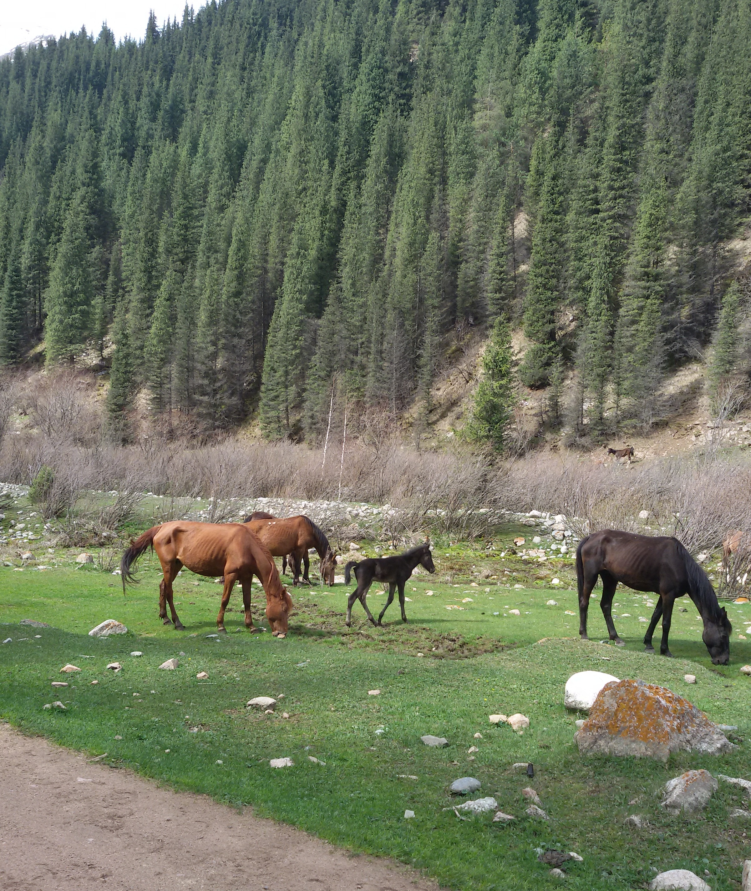 Horses at Chon Ak-Suu