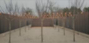 Tree Dedication.jpg