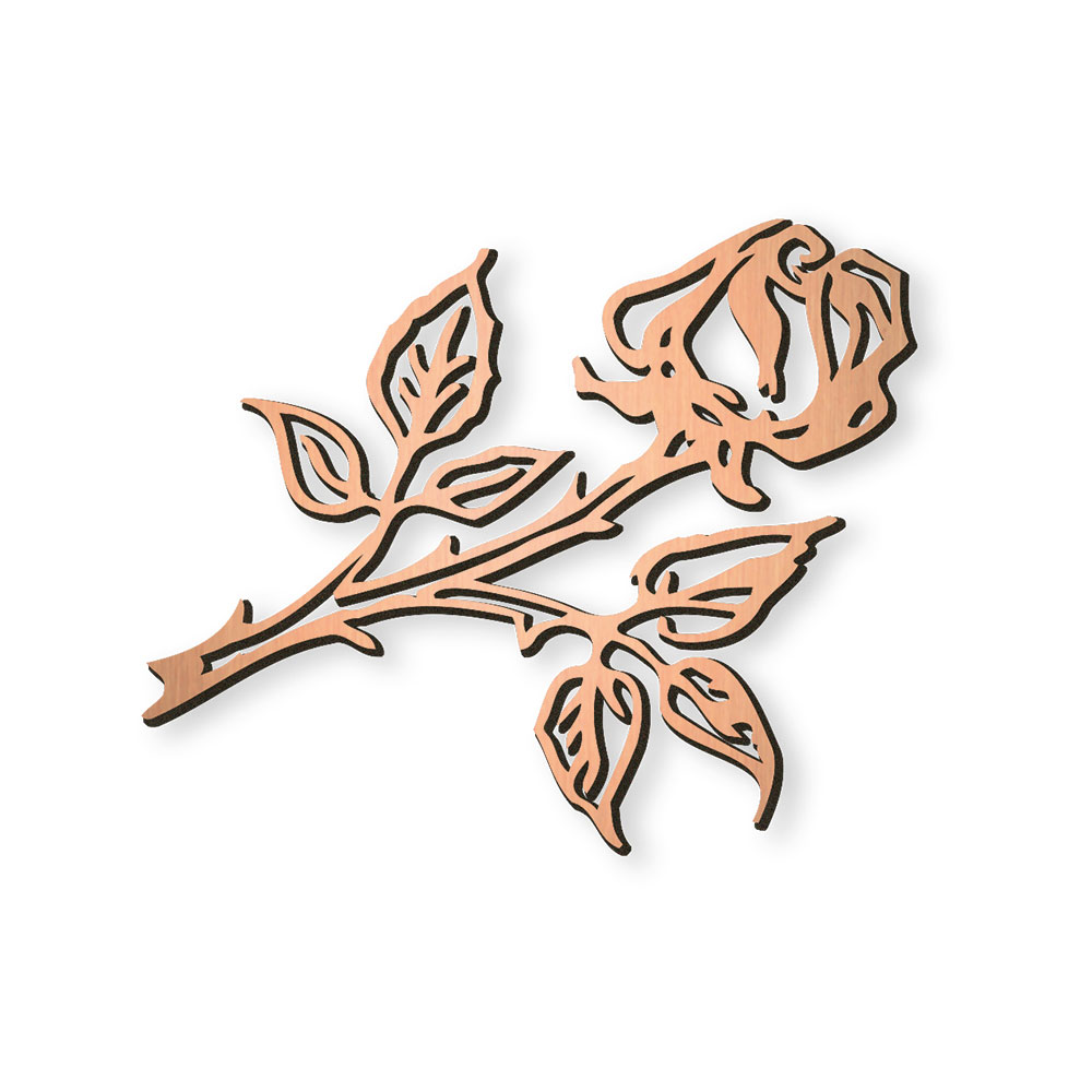Rose nr. 20877
