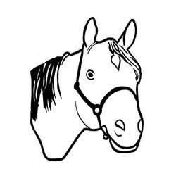 Hest-6