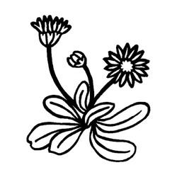 Blomst-5