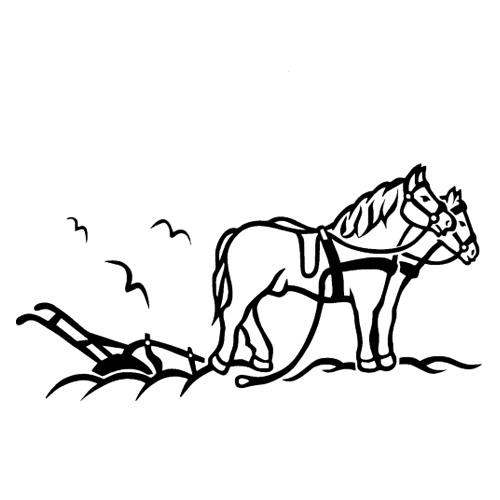 Hest-4