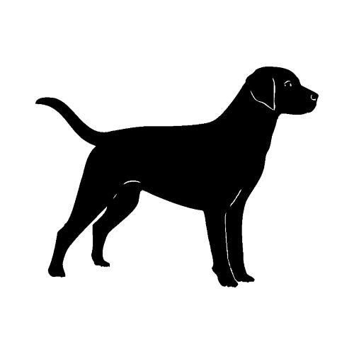 Hund-11