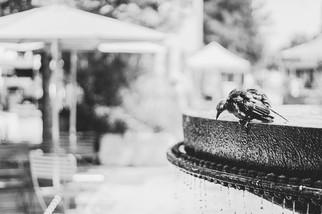 Vandsten i granit som passer til haven o