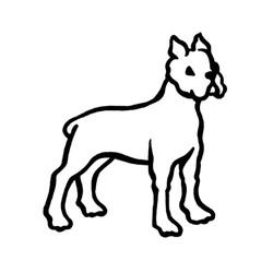 Hund-4