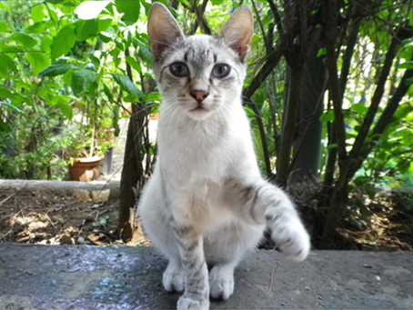 The Cats of Sicily