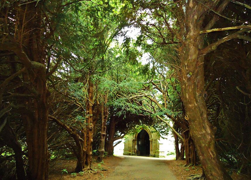 Yew trees at Burton Agnes.jpg