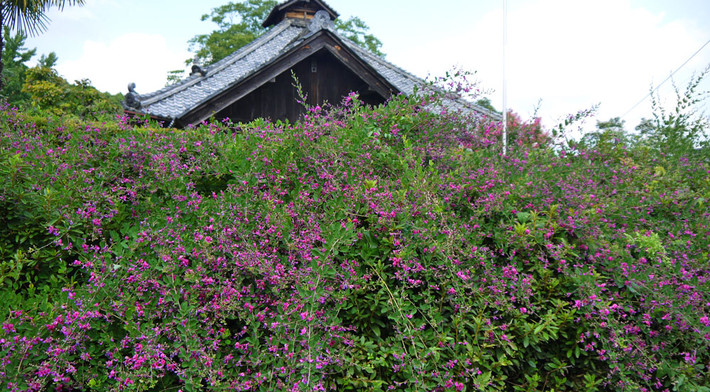 shorekiji2.jpg