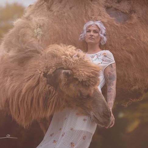 Fotoshooting mit Kamel