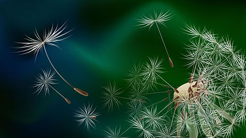 wallpaper-dandelion-paper-mural-high-resolution-wallpapers-images.jpg