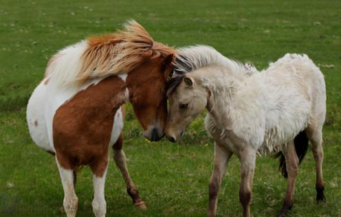 pony love.jpg