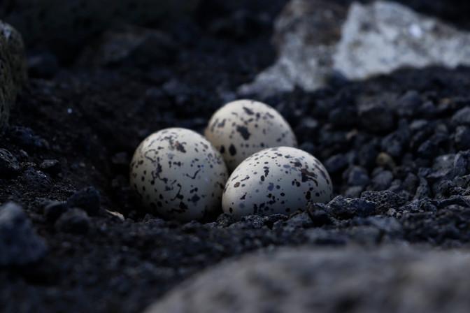 iceland eggs.jpg
