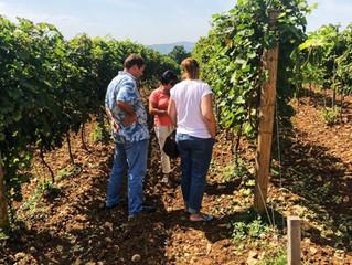 Тур в Gunko Winery