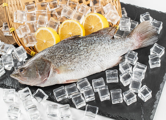 Sea Bass (鲈鱼)