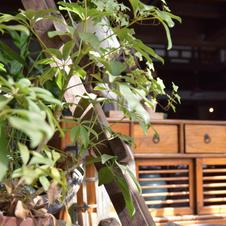 あったかい日差しと、たくさんの植物が気持ちのいい空間になっています。 しっくりくる場所をみつけて!