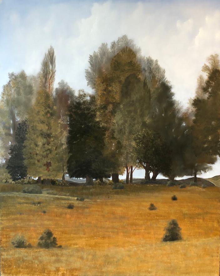 Sonoma Meadow
