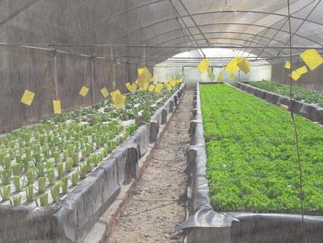 تعرف علي ما هي الزراعة المائية - اكوابونيكا الزراعة المائية