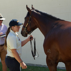 What to look for when buying a broodmare?