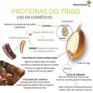 proteinas trigo.jpeg