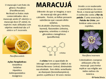 Passiflora.png
