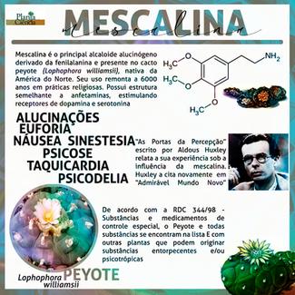mescalinaPC903.png