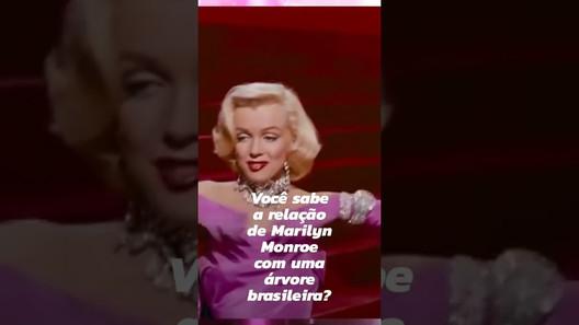 Qual a relação entre Marilyn Monroe e uma árvore nativa brasileira?