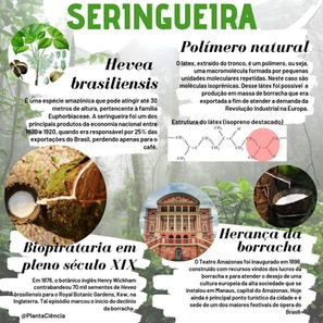 SERINGUEIRA.png