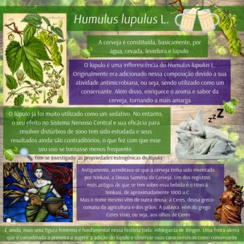 Humulus lupulus L. (3).png