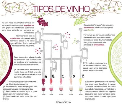 tipos de vinho.png