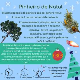 pinheiro de natal.png