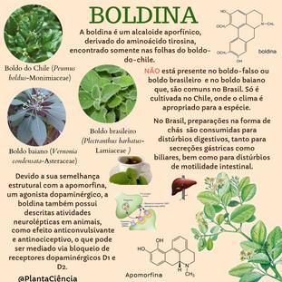 BOLDINA (1).png