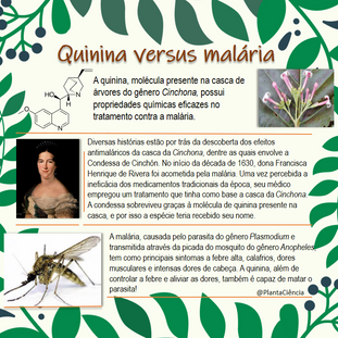 quinina versus malaria.png