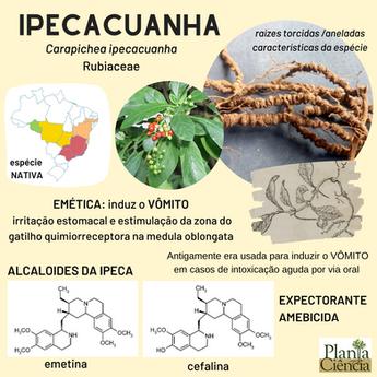 IPECA.png