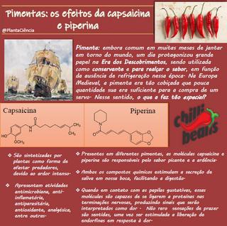 pimentas, os efeitos da capsaicina e pip