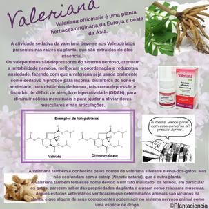 valeriana.png