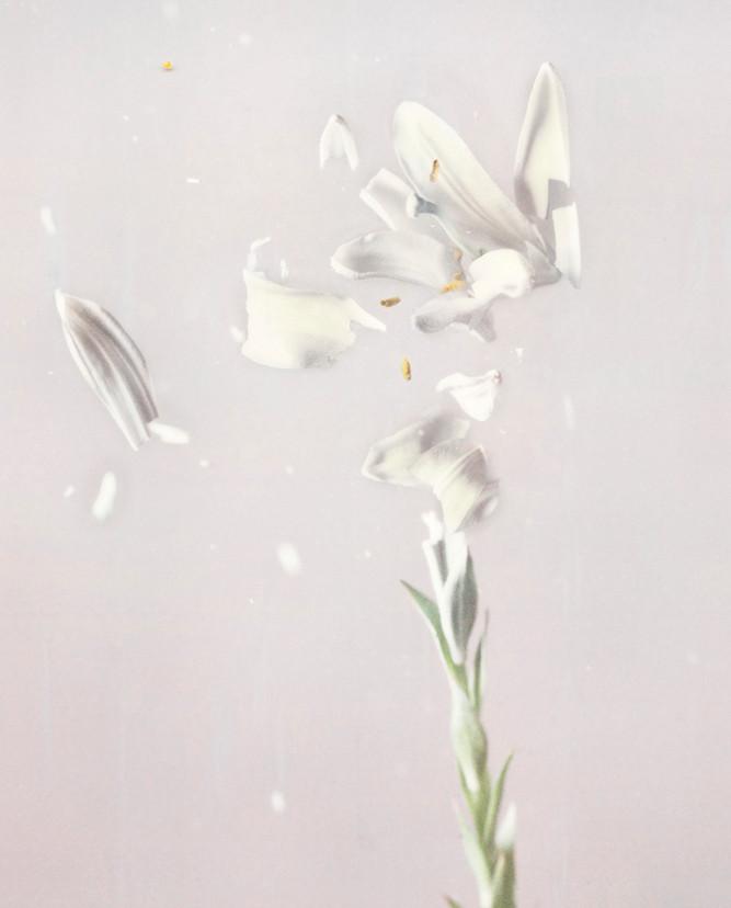Lily P04