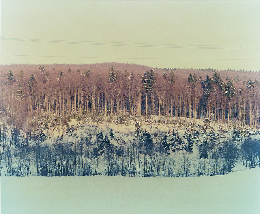 Long Forest