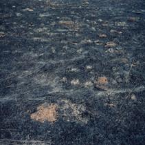 Black Soil 2