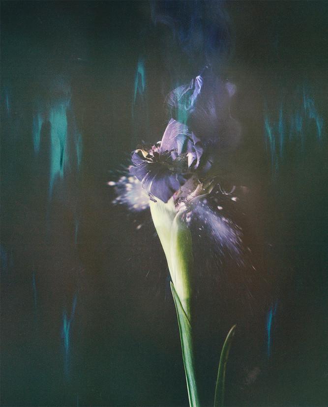 Iris P05