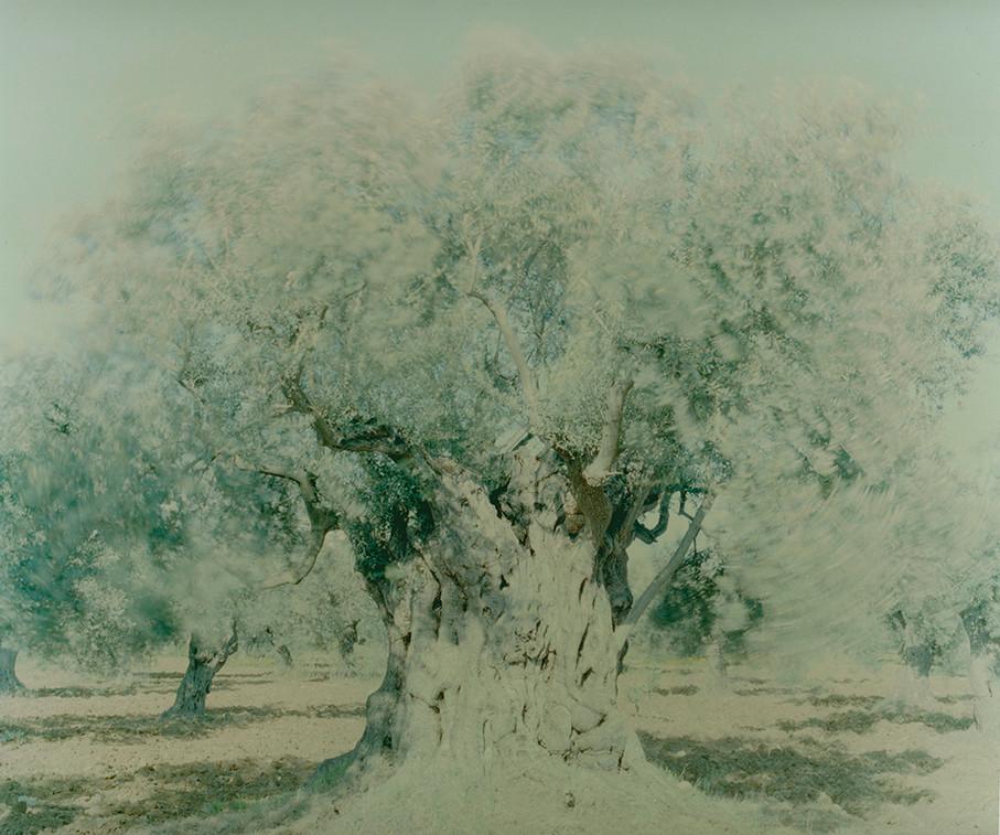 olive 08