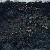 Black Soil 1